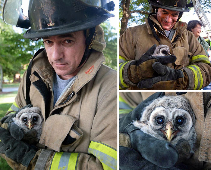 48 Firefighters Who Risked Their Lives To Save Animals