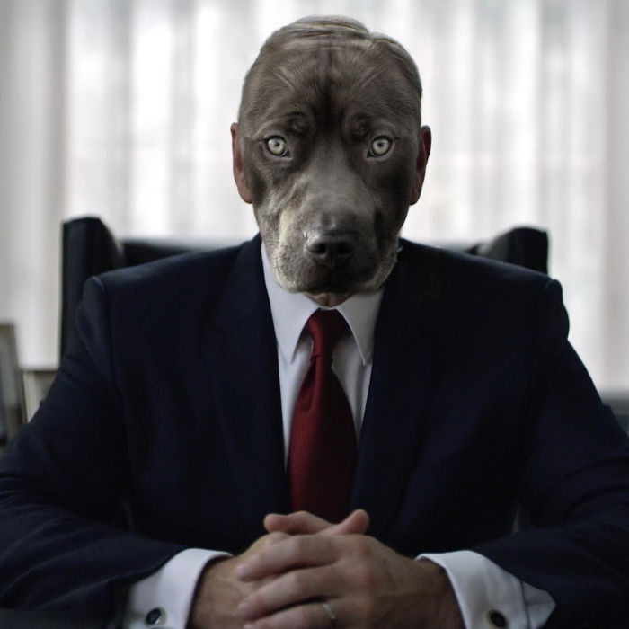 We Reimagined House Of Cards Cast As Dogs