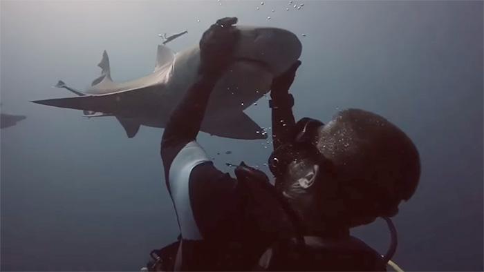 friendly-shark-diver-pet-randy-jordan-1
