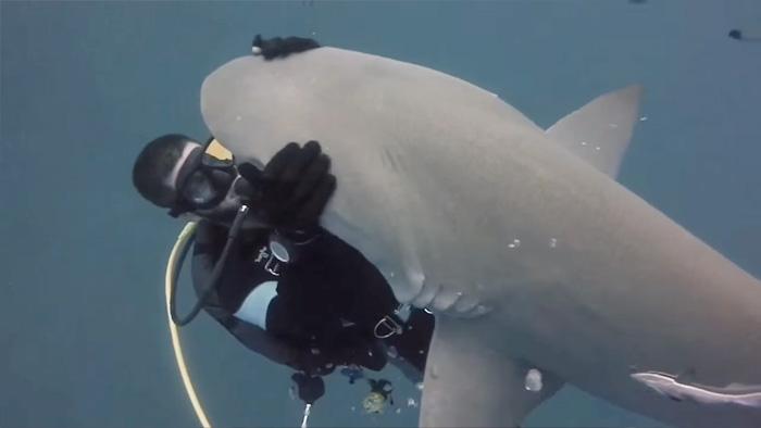 friendly-shark-diver-pet-randy-jordan-2