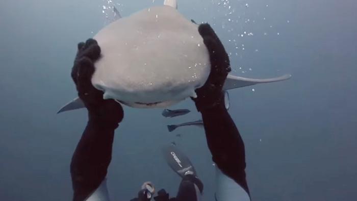 friendly-shark-diver-pet-randy-jordan-4