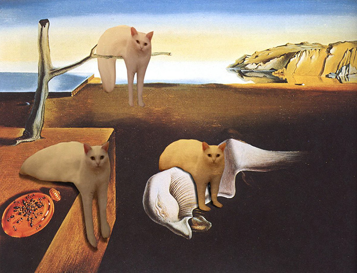 Dali Cat