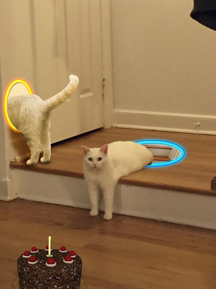 Portalcat
