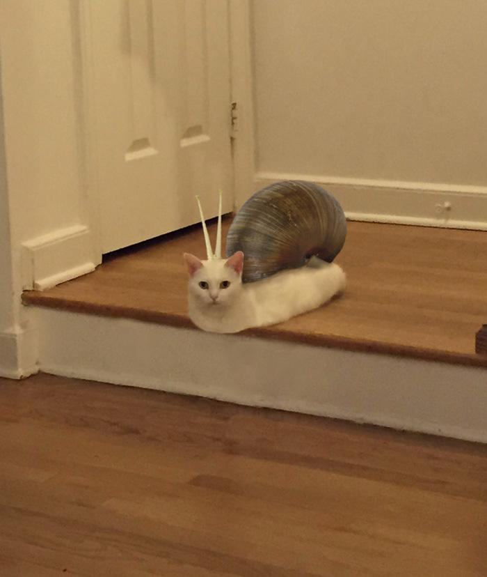Catsnail