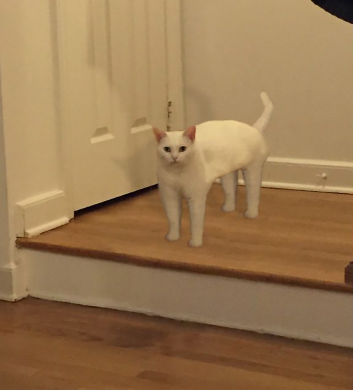 Non-awkward Full-cat Pose