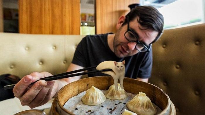 Cat Dumpling