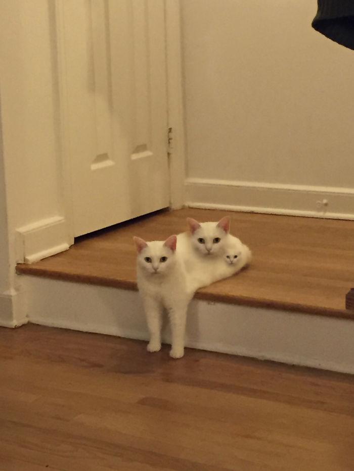Cat Has Cats
