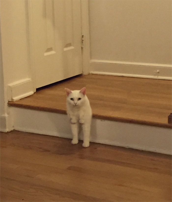 Now Isn't That A Cute Cat