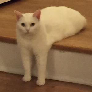 Awkward Half-Cat Inspires Hilarious Photoshop Battle (15+ Pics)