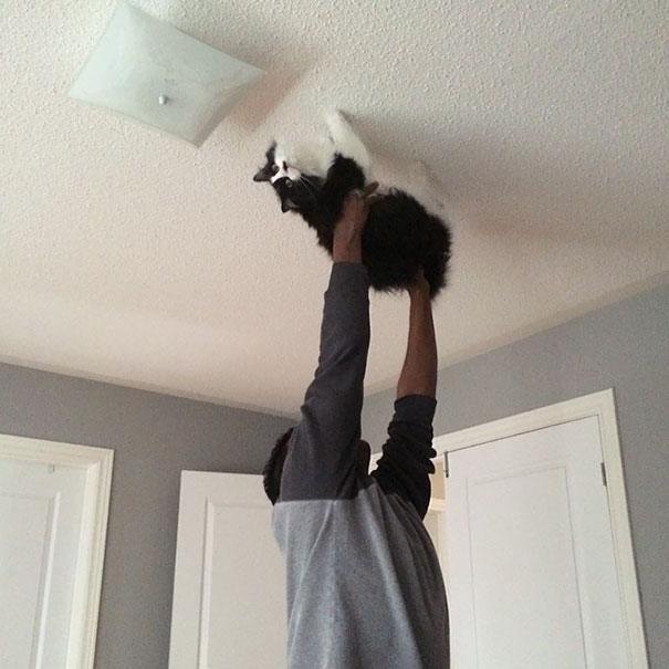"""Walked On My Husband Walking The Cat Across The Ceiling While Singing """"Spider Cat, Spider Cat Does Whatever A Spider Cat Does"""""""