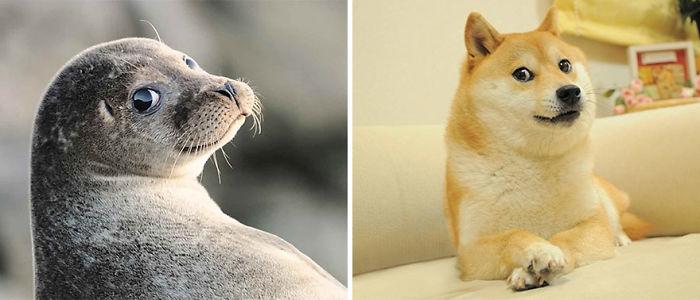 Seal Looks Like Dog