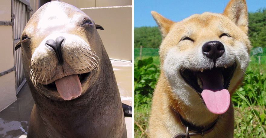 Seals Look Like Dog