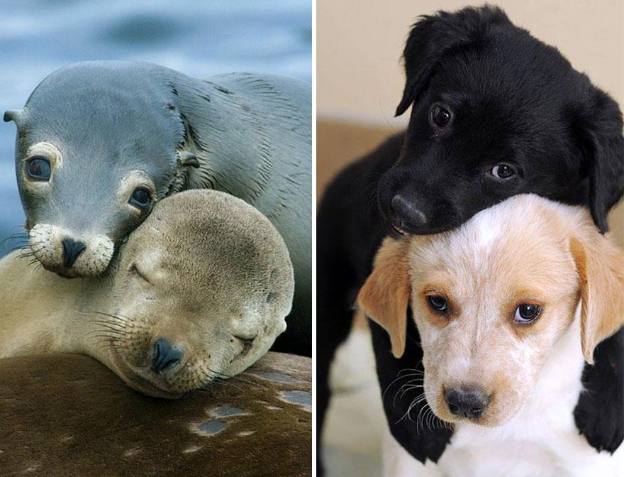 Seals Are Actually Ocean Puppies (40 Pics) | Bored Panda