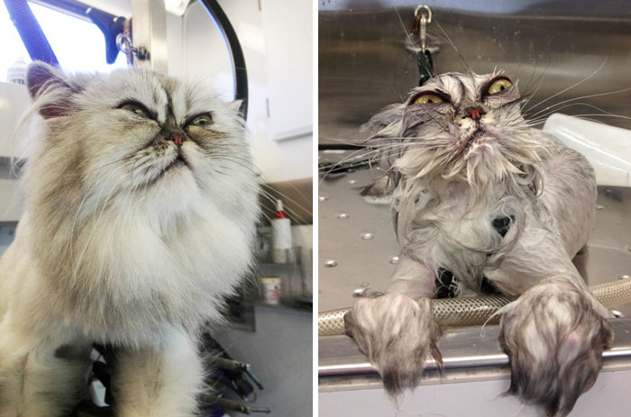 15+ Hilarious Animals Before And After A Bath