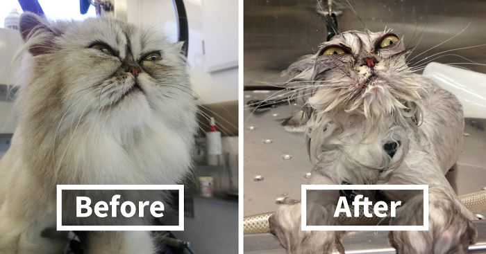 Hilarious Animals Before And After A Bath Bored Panda - 15 hilarious animals whod do anything for your food