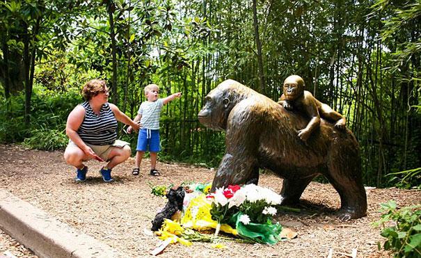 gorilla-shot-after-boy-fall-zoo-enclosure-cincinnati-harambe-13