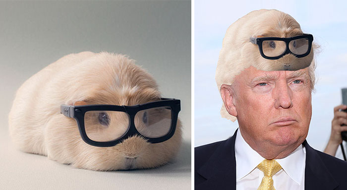 Photoshop This Hipster Guinea Pig To Reveal Her Secret Identity