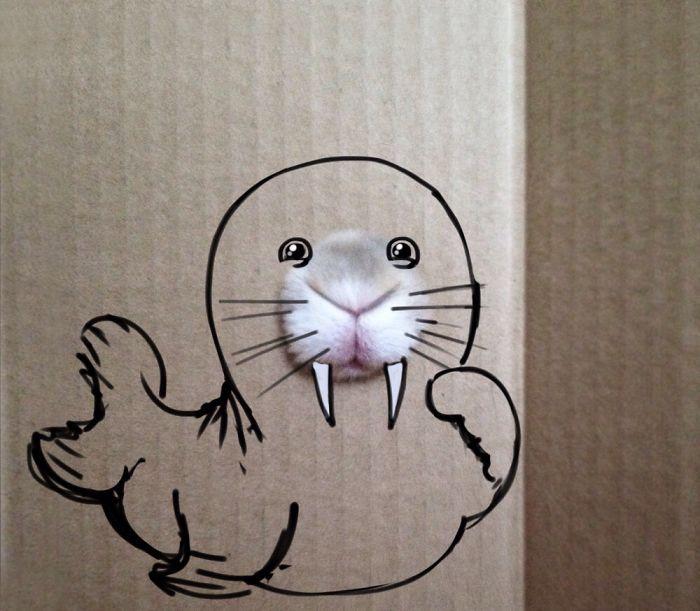 Cute Seal Is Hiding Behind The Box!