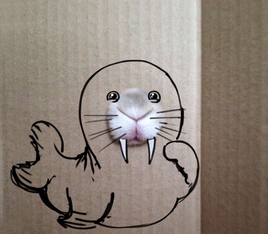 Cute Seal Is Hiding Behind The Box!