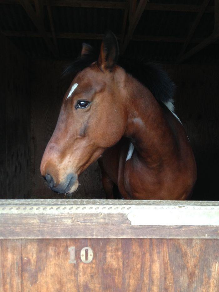 My Beautiful Horse Bally