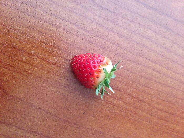 First Harvest