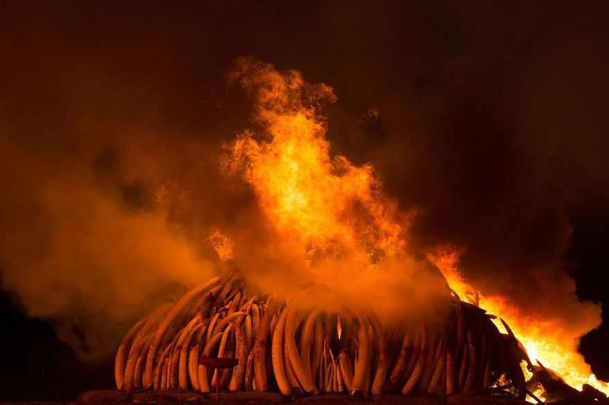 kenya-burns-ivory-elephant-rhino-poaching-a1