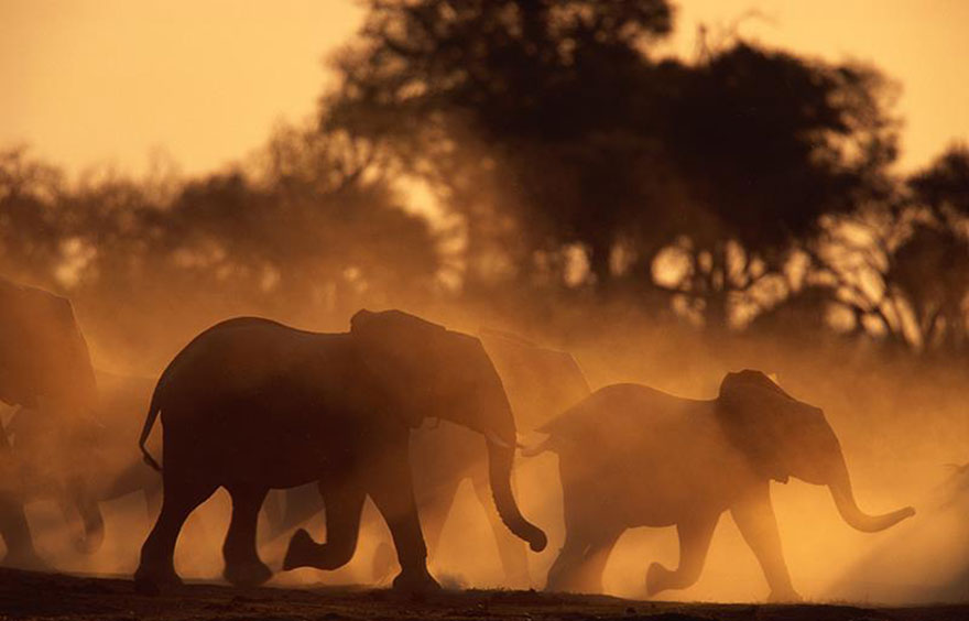 kenya-burns-ivory-elephant-rhino-poaching-a10
