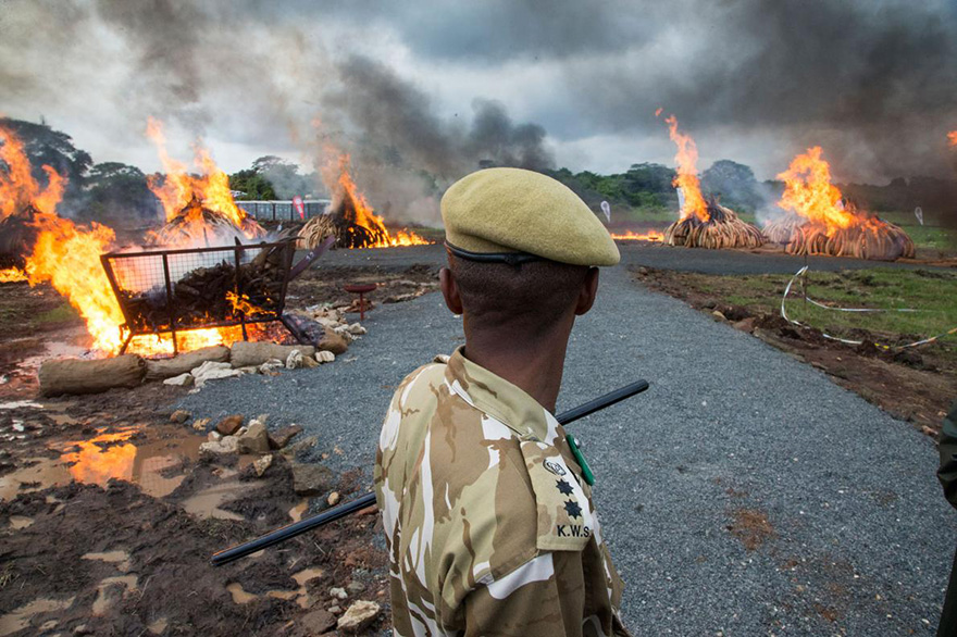 kenya-burns-ivory-elephant-rhino-poaching-a16
