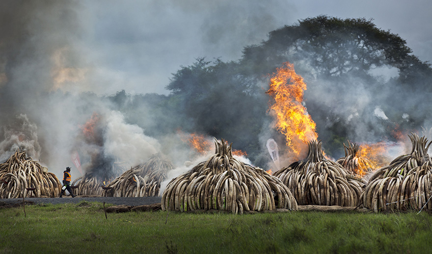 kenya-burns-ivory-elephant-rhino-poaching-a8