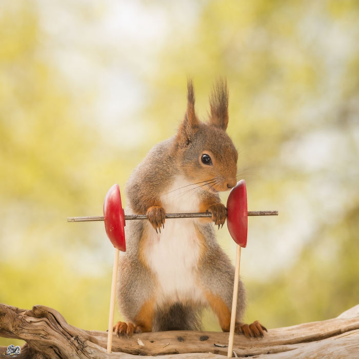 Photos Of Red Squirrels Playing Sports And Games