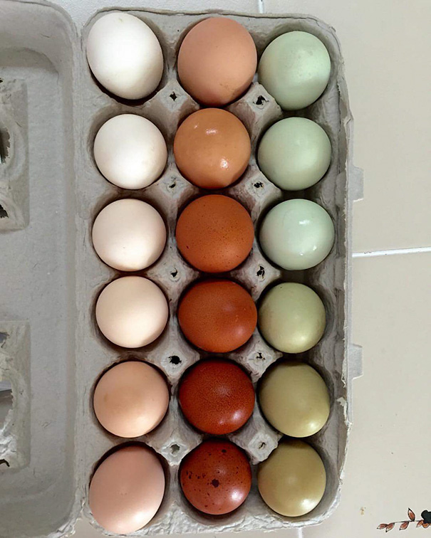 My Aunt's Chickens Laid A Satisfying Palette Of Eggs