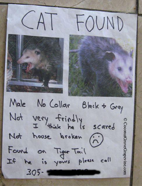 oppossum-5728cd6a7ae00.jpg