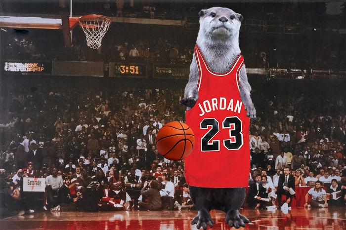 Otter Jordan