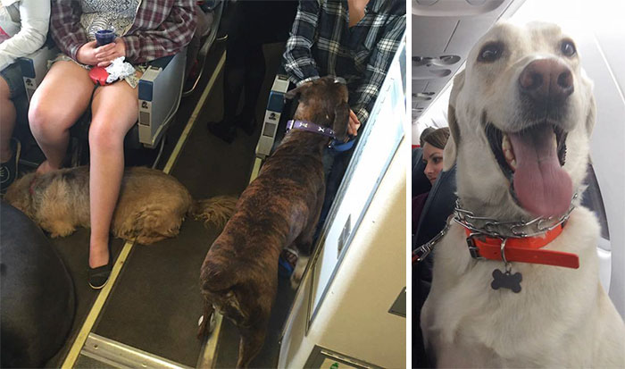 Airlines Break Their Own Rules So Pets Can Escape Fires