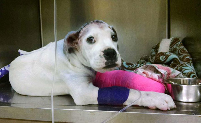 rescue-dog-comforts-pup-surgery-sammie-simon-4