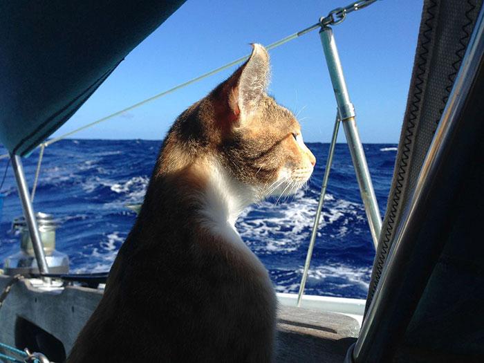 sailing-cat-travelling-world-liz-clark-16