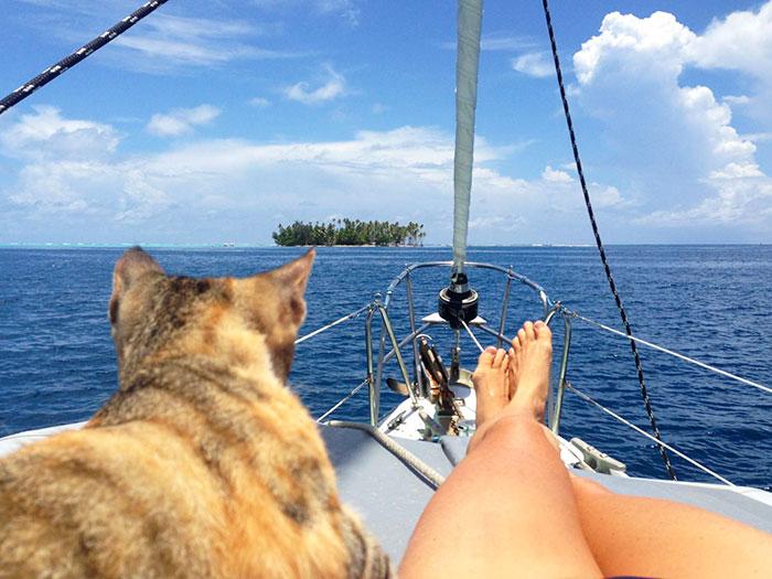 sailing-cat-travelling-world-liz-clark-20