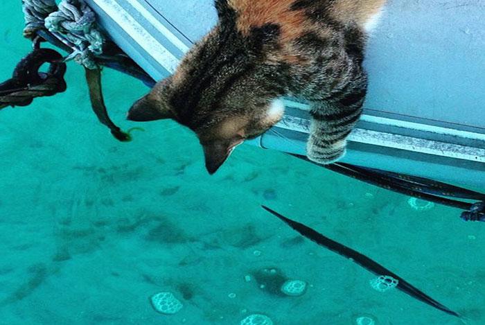 sailing-cat-travelling-world-liz-clark-29