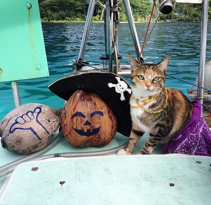 sailing-cat-travelling-world-liz-clark-37
