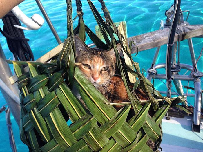 sailing-cat-travelling-world-liz-clark-46