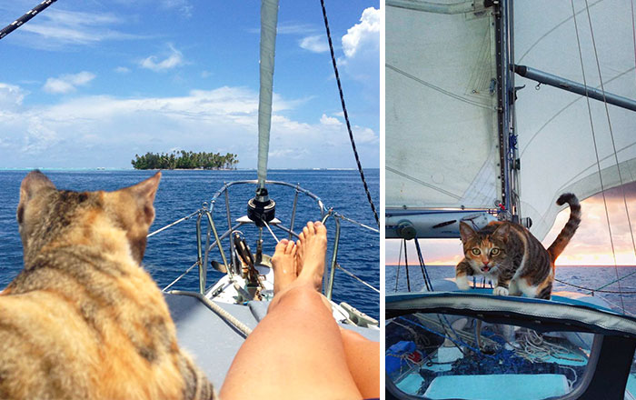 Woman Quits Her Job And Sails Around The World With Her Rescue Cat