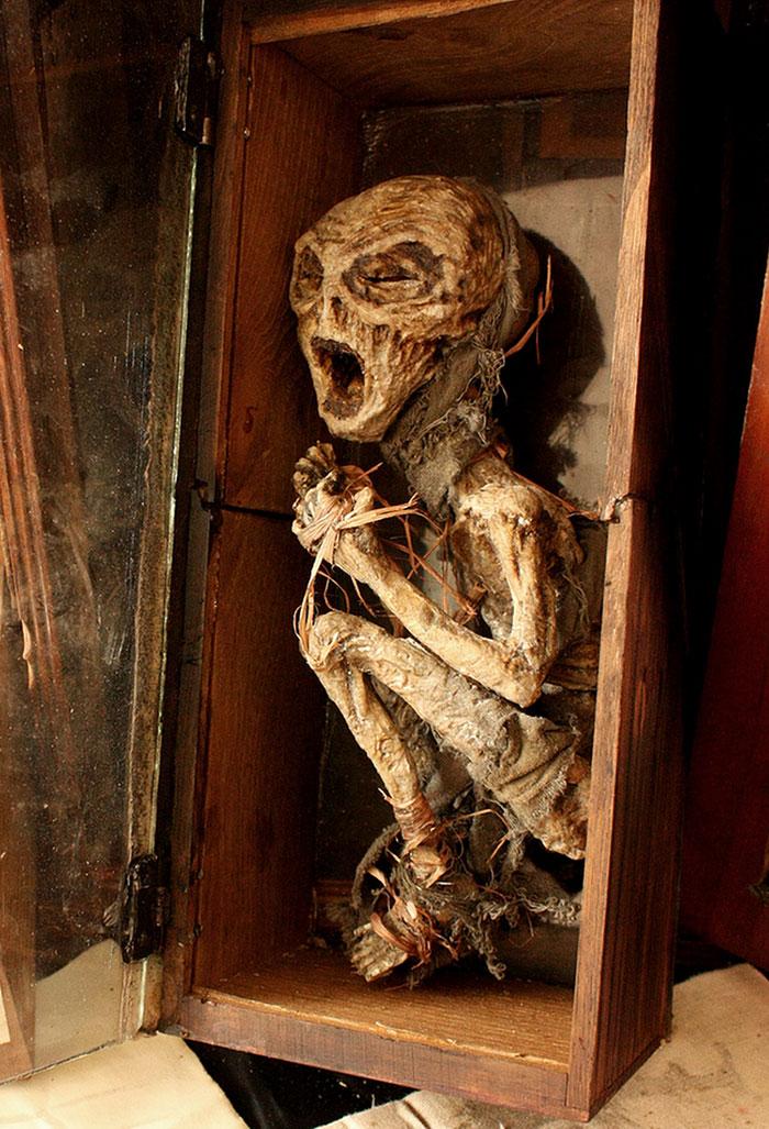 skulls-skeletons-thomas-theodore-merlin-home-london19