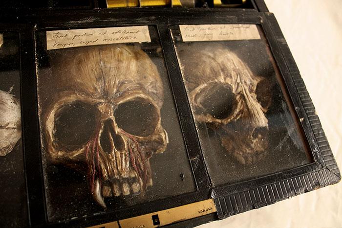 skulls-skeletons-thomas-theodore-merlin-home-london6