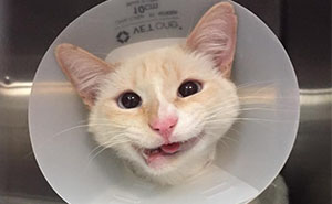 Rescue Cat Turns Broken Jaw Into Gorgeous Smile