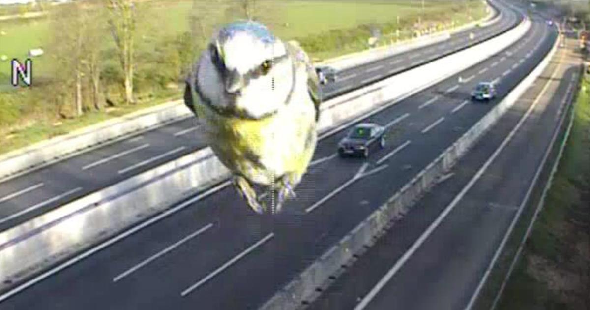 M1 Traffic Cameras >> Traffic Camera Captures Speeding Blue Tit on UK Motorway | Bored Panda