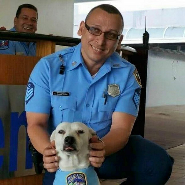 stray-dog-adopted-police-gorgi-bayamon-puerto-rico-17