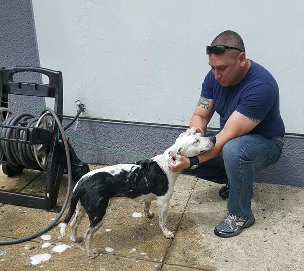 stray-dog-adopted-police-gorgi-bayamon-puerto-rico-4
