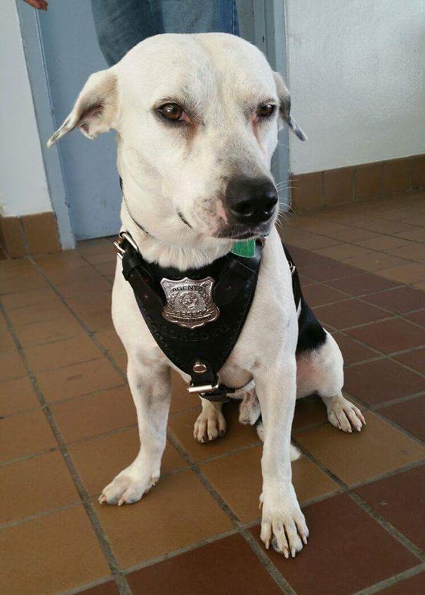 stray-dog-adopted-police-gorgi-bayamon-puerto-rico-5