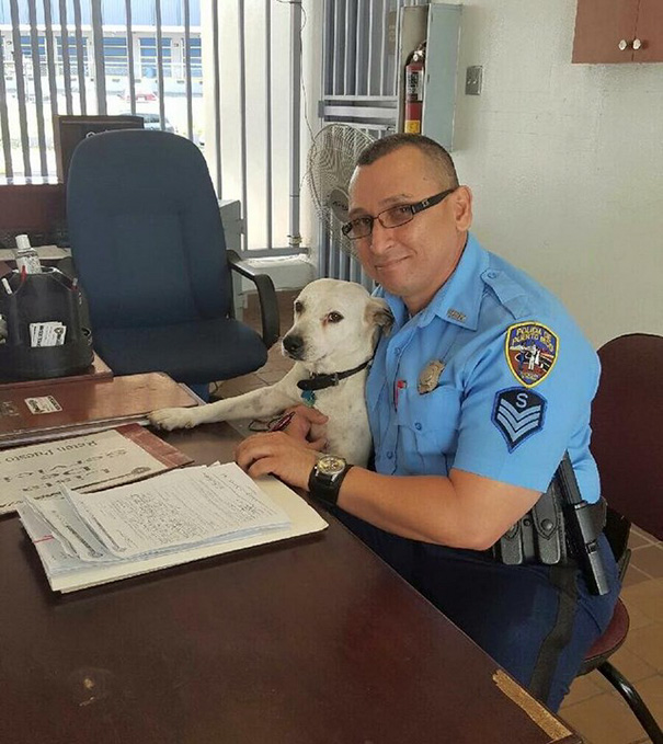 stray-dog-adopted-police-gorgi-bayamon-puerto-rico-8