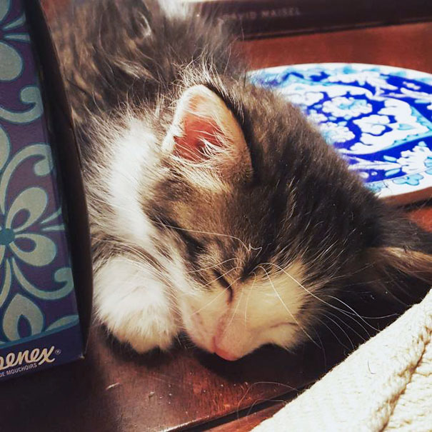 stray-kitten-found-under-truck-adopted-cat-axel-3